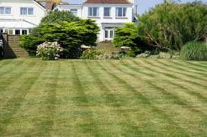 frisch gedüngter Rasen