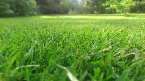 grüner Rasen dank Rasendünger