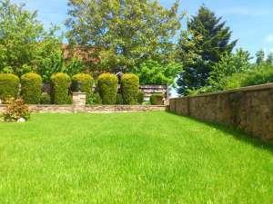 grüner Rasen durch einen Rasendünger Test