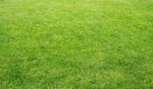 Lawn with different plants, nature background. Close-up view