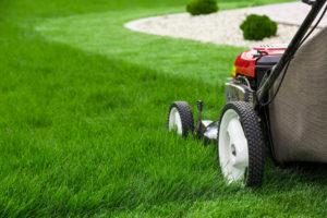 Die optimale Rasenlänge durch Rasenmäher erziehlen