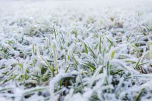 Rasen bei Frost