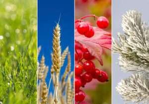 Collage of four seasons/Vier Jahreszeiten