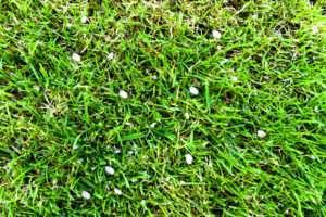 Rasen mit Dünger