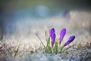 Rasen nach dem Winter