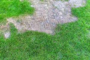 kahle Flecken im Rasen
