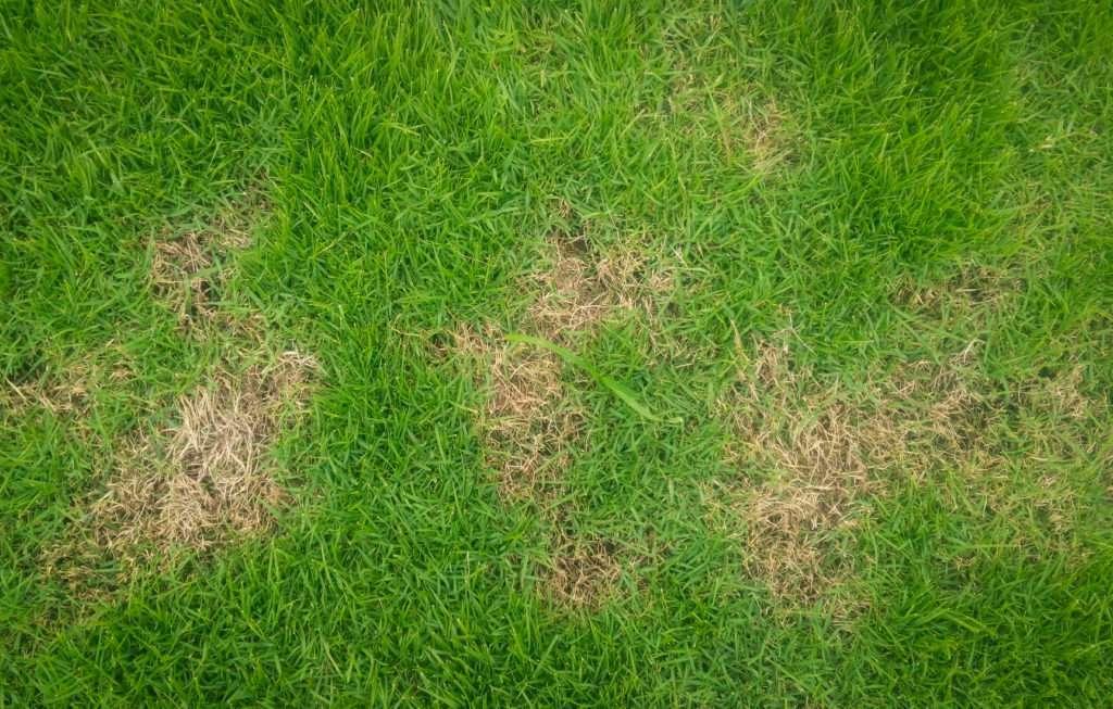 Zu Viel Des Guten Schadet Dem Rasen Rasenduenger De