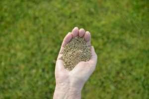 Grassamen in der Hand