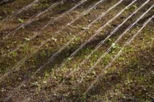 Bewässerung einer Rasen Neuansaat